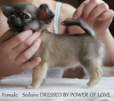 seduire Dressed by power of love